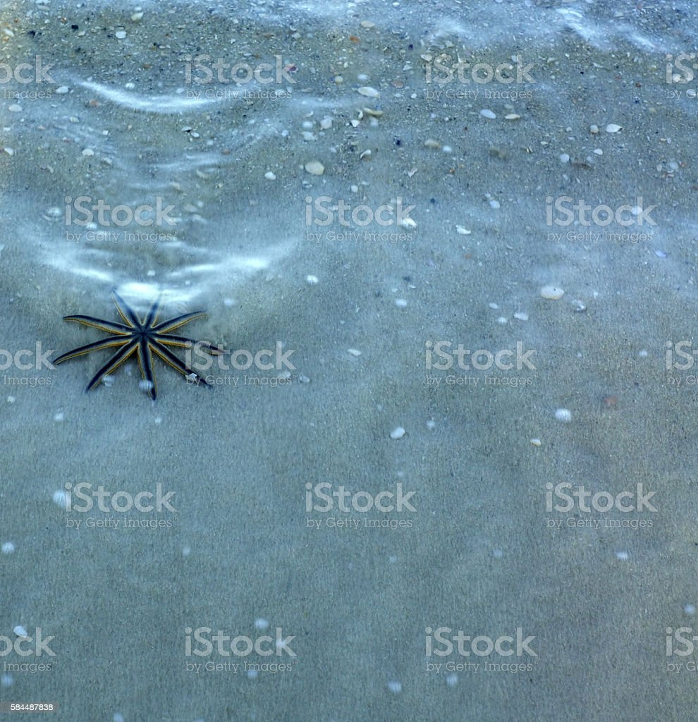 starfish with nine legs stock photo