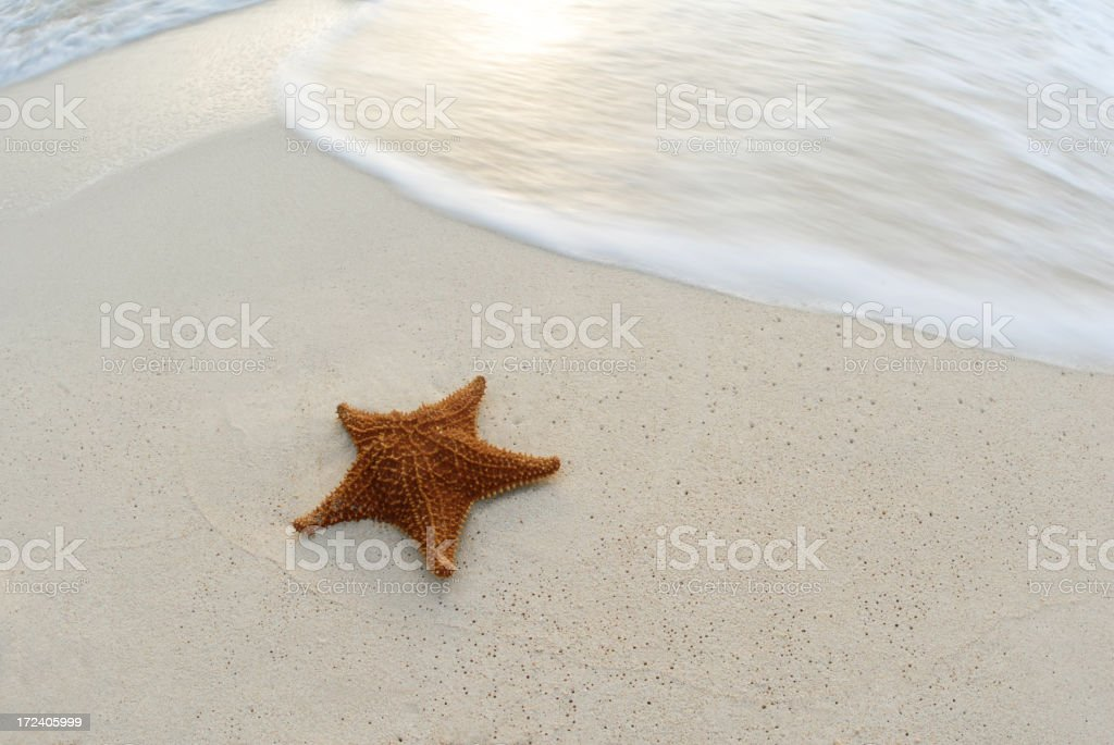 Starfish with Waves in Mexico royalty-free stock photo