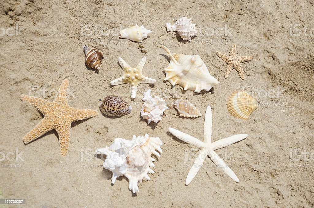Starfishes and seashells on a beach stock photo