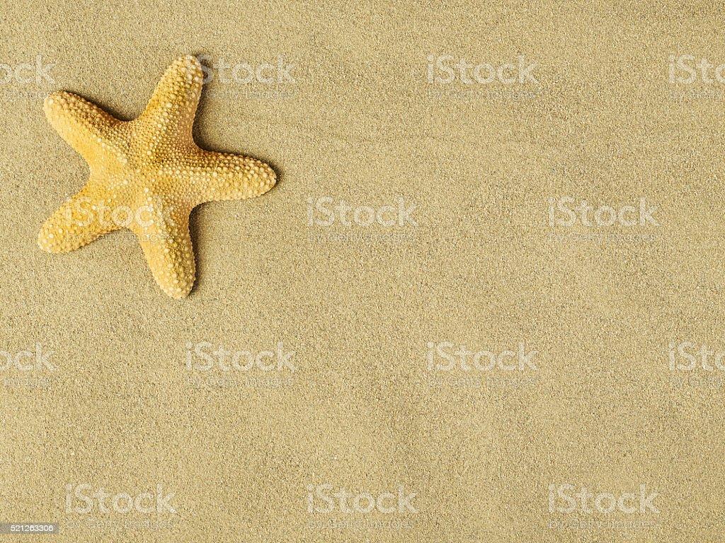 Starfishes on sand stock photo