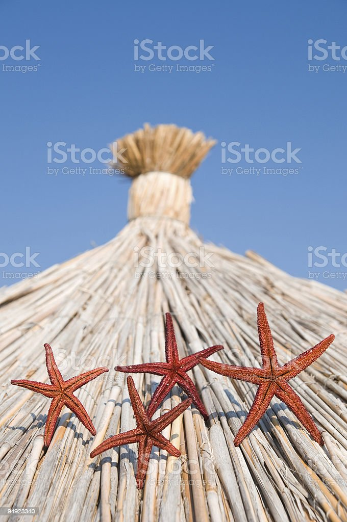 Starfishes on sun umbrella stock photo