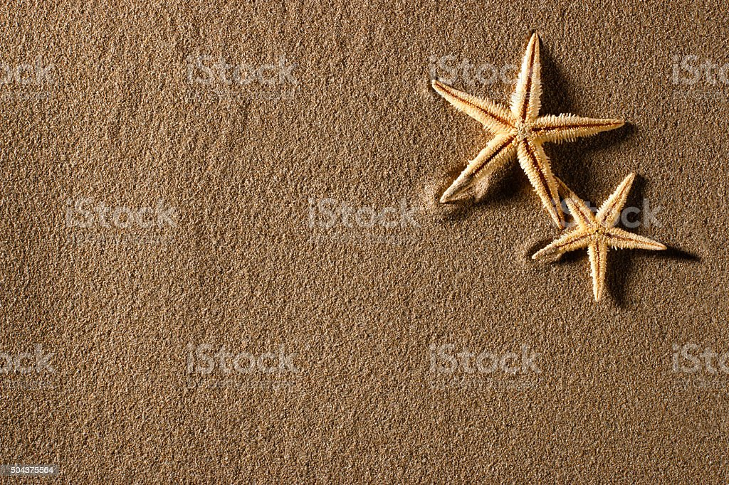Starfishs and empty sand field stock photo