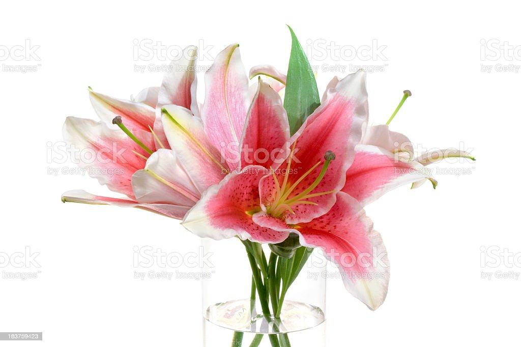 Stargazer Oriental Lily. stock photo
