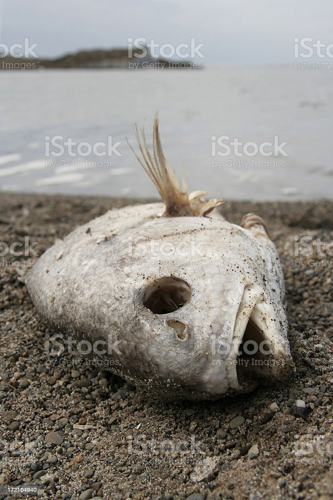 Staring death in the eye stock photo