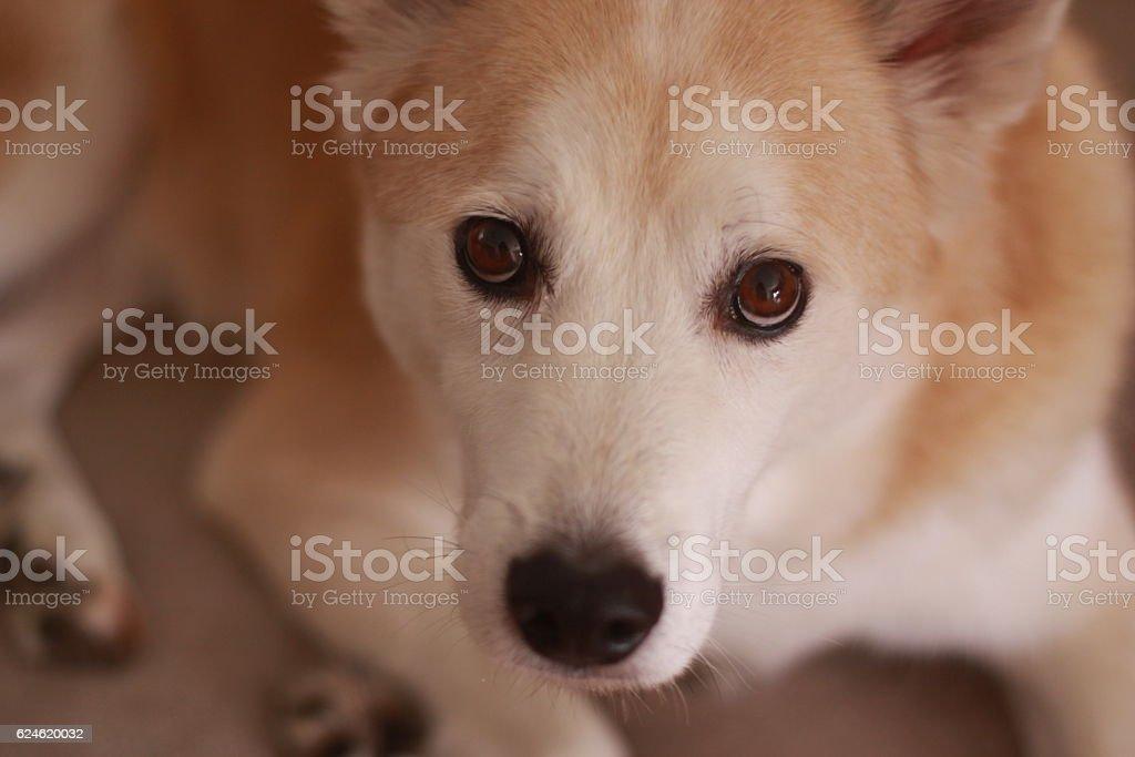 Staring dog stock photo