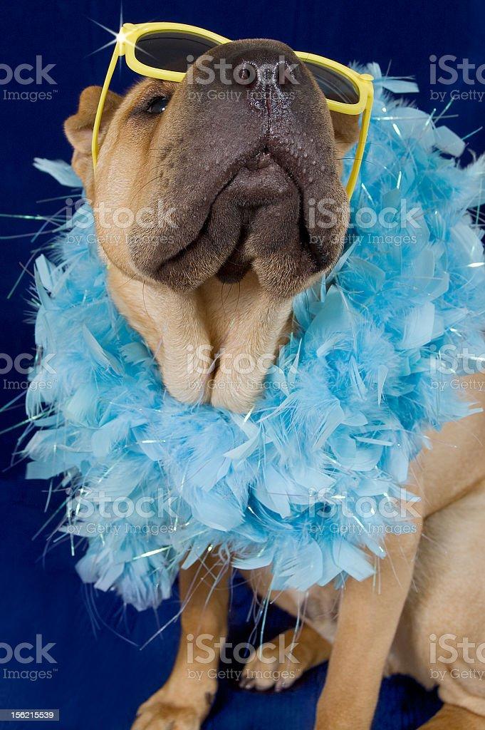 Starlet Puppy royalty-free stock photo