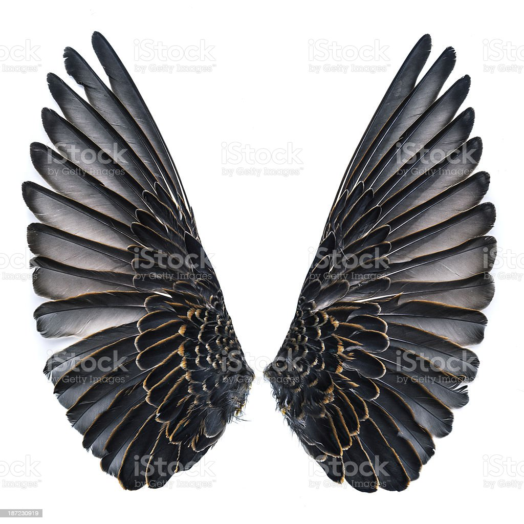 Starling bird wings royalty-free stock photo