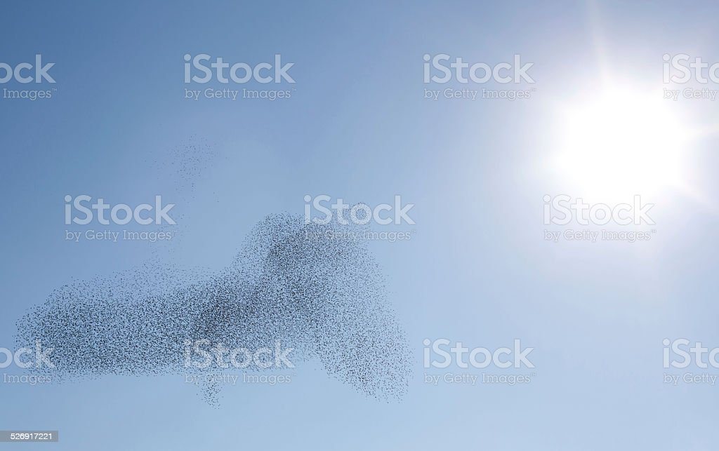 Starling, Sky and Sun stock photo