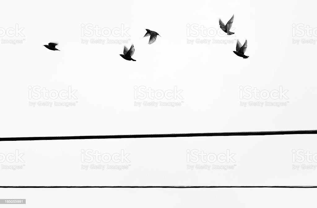 Starlings Flyby royalty-free stock photo