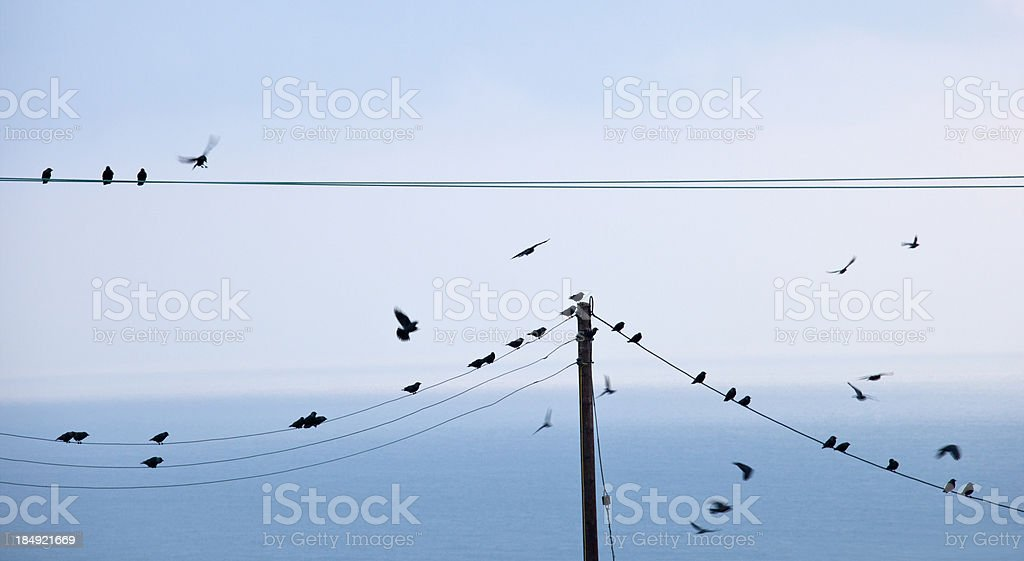 Starlings on Telegraph wire stock photo