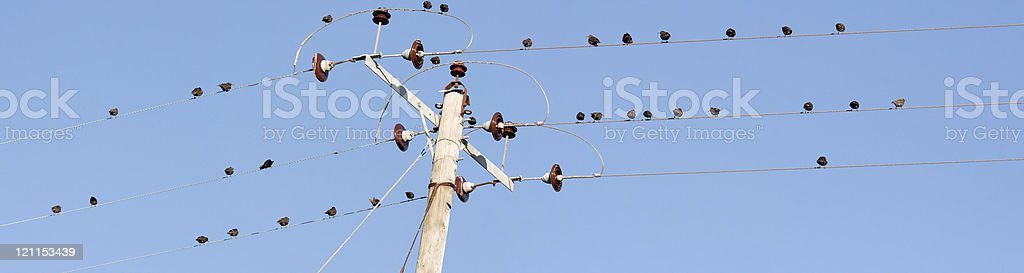 Starlings Wires Panorama royalty-free stock photo
