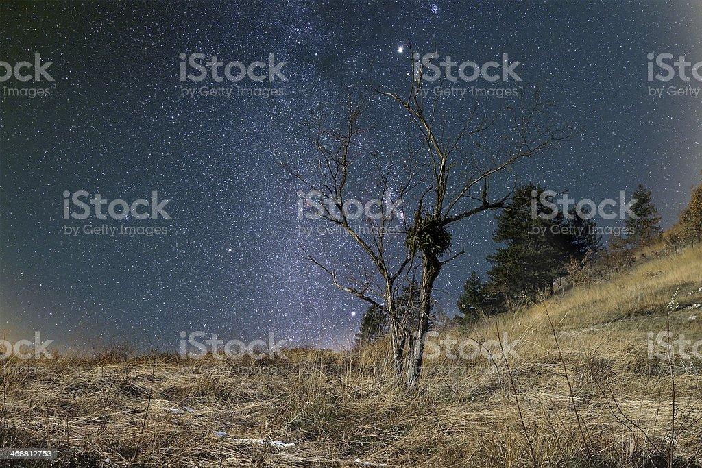 Starry landscape royalty-free stock photo