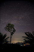 Starry night and milky way with trees and citylight.