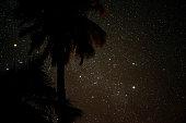 Starry Night with Palms