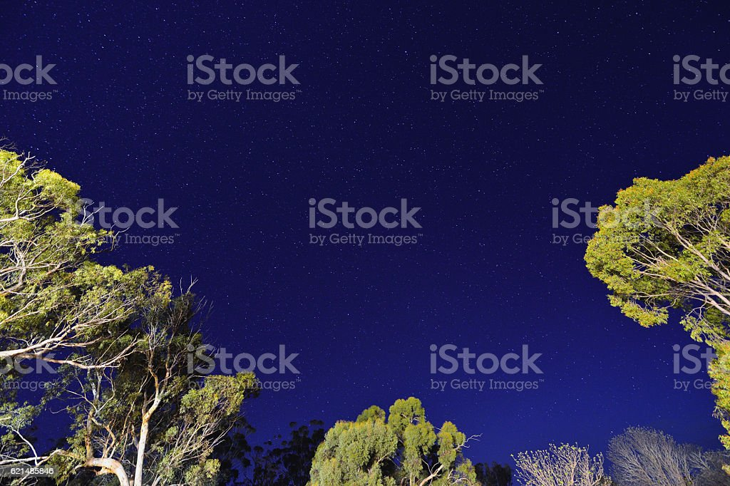 Starry Sky and Tree Crown stock photo