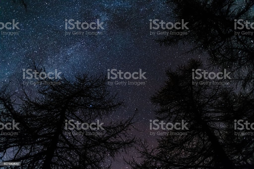Starry sky viewed from black conifer woodland stock photo