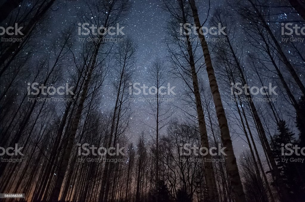 Stars above treetops stock photo