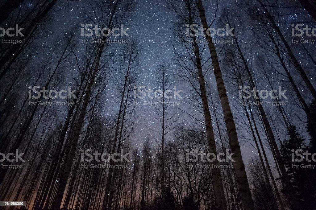 Stars above treetops stock photo