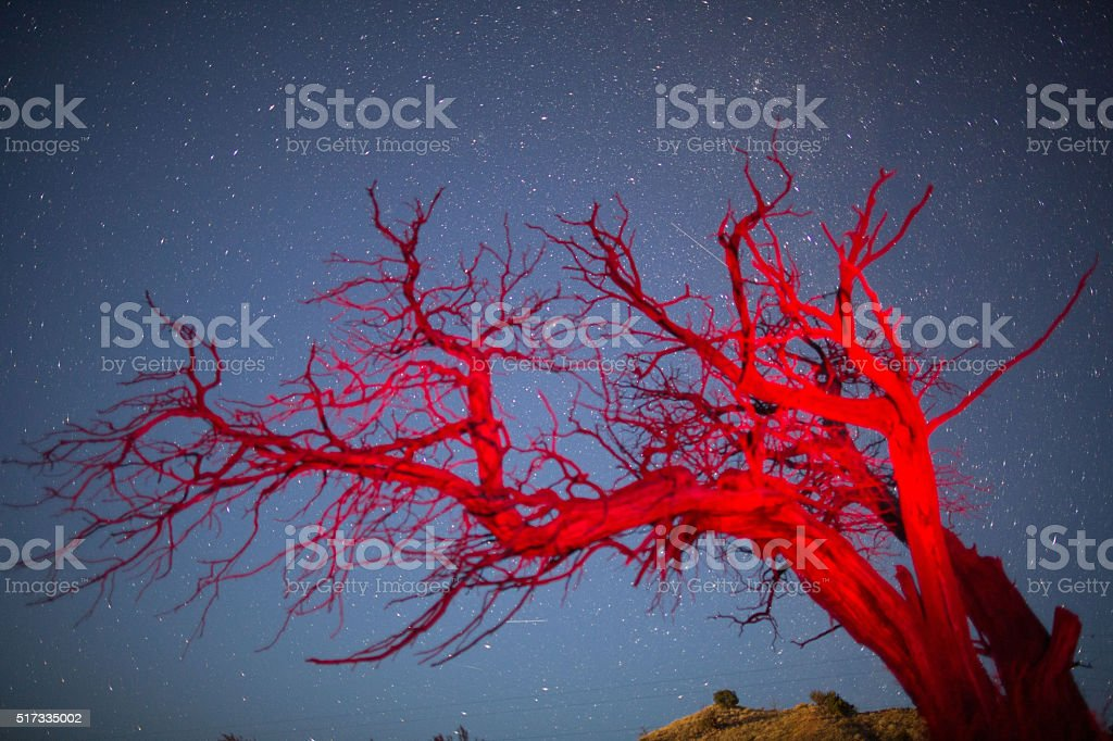 Stars and Milky Way above red tree stock photo