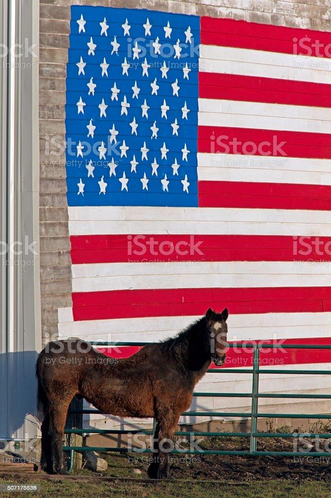 Stars and stripe with Horse,La Conner WA stock photo
