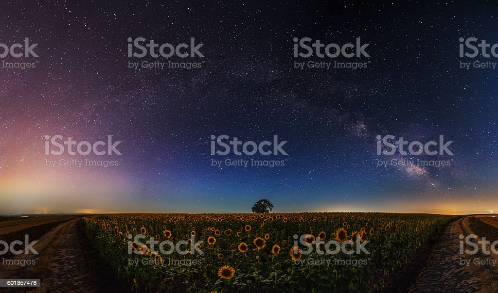 Stars and the moon on a field of sunflowers stock photo