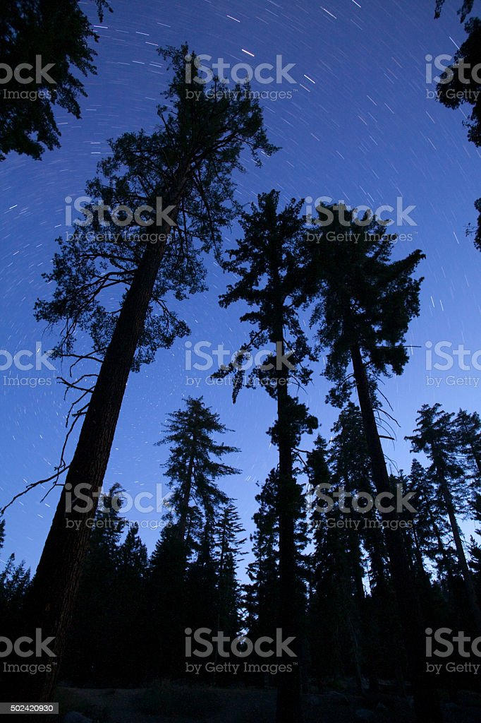 Stars circle over massive lodgepole pines Sequoia National Park California stock photo