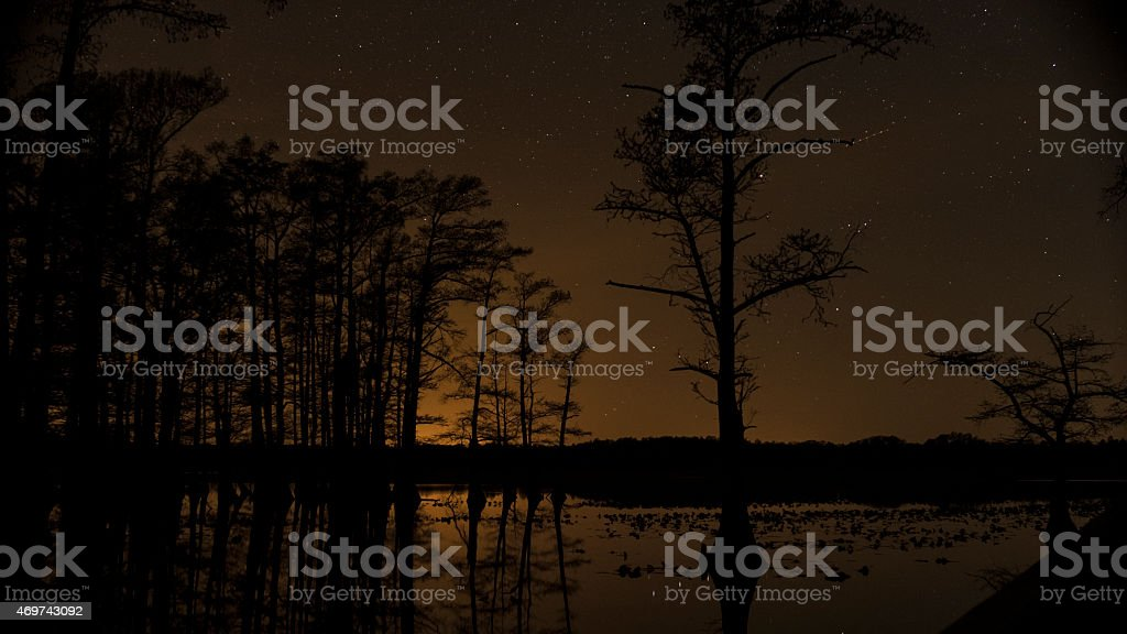 Stars in night sky behind silhouetted swamp trees stock photo