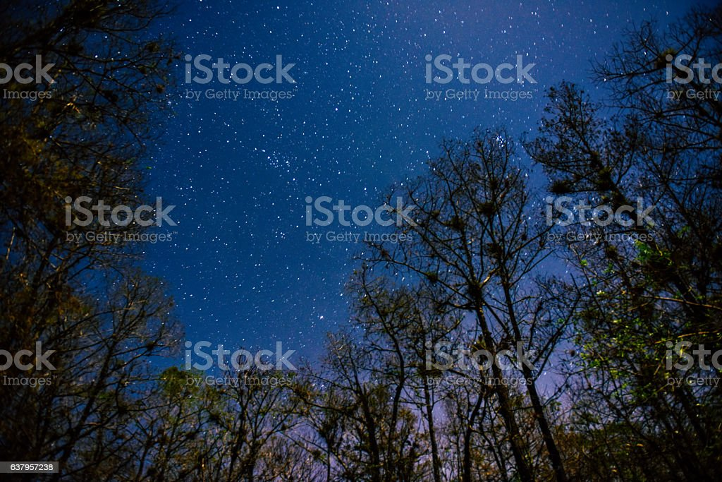 Stars light up the Everglades in Florida stock photo