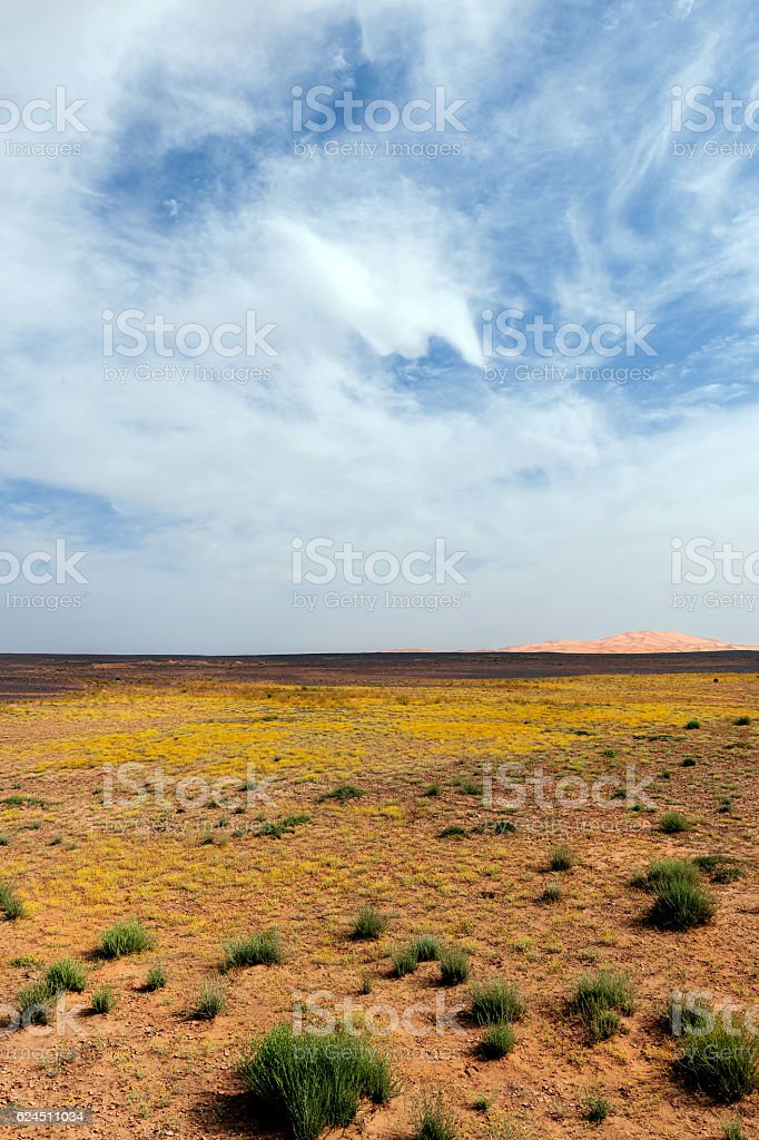 Start desert in the  Erg Chebbi Sand, Morocco,Northern Africa stock photo
