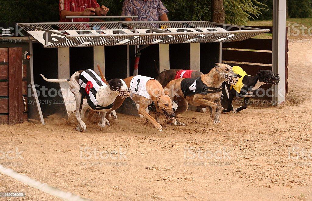Start the race royalty-free stock photo
