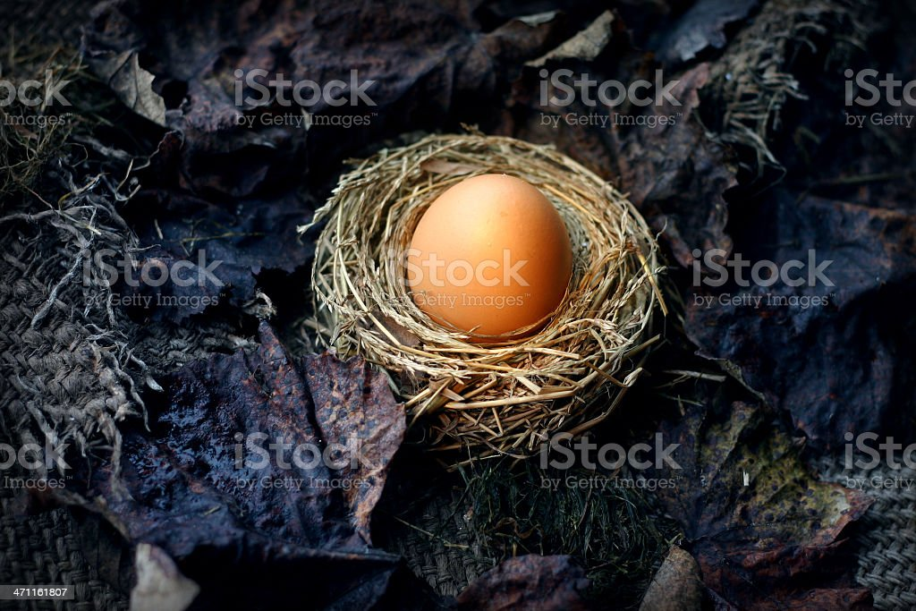 Starting Anew royalty-free stock photo