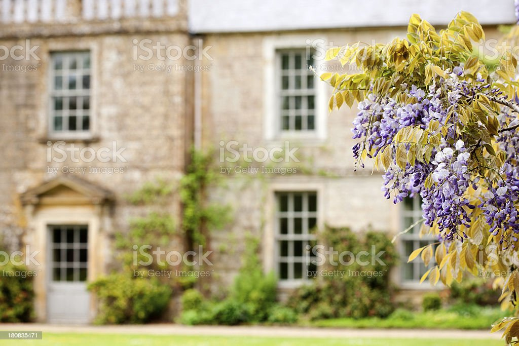 Stately Home, Wisteria stock photo