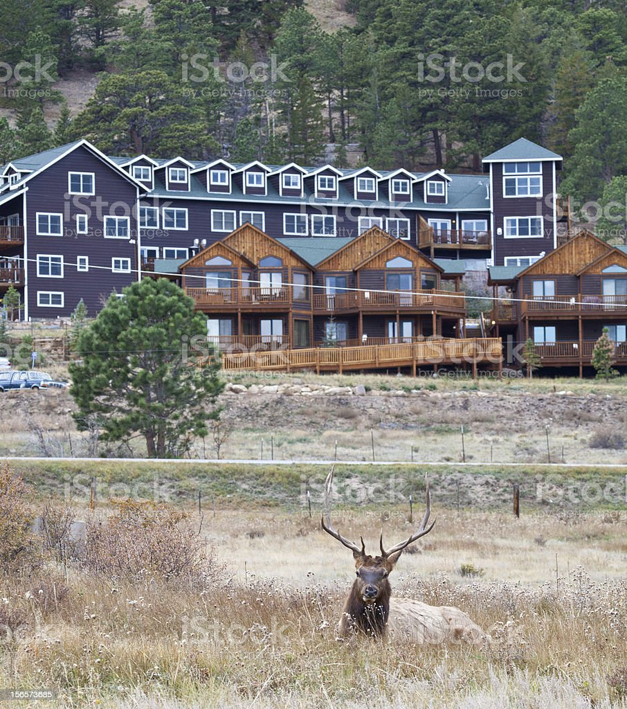 Staying at the Lodge royalty-free stock photo