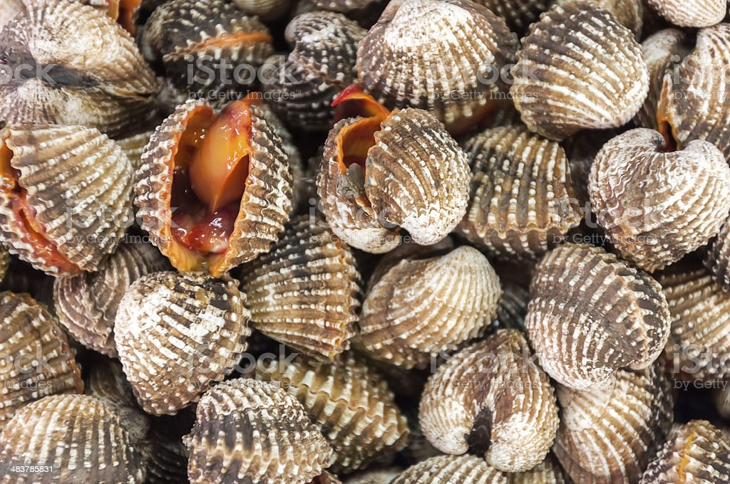 Steamed cockles. stock photo
