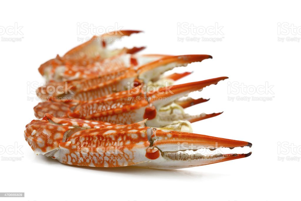Steamed Crab Leg stock photo