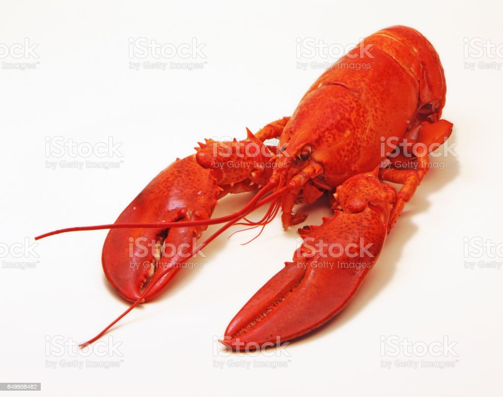 Steamed Lobster stock photo