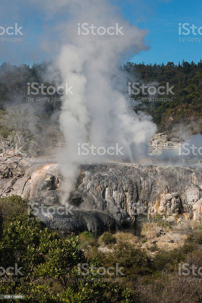 steaming geysers in Rotorua, New Zealand stock photo