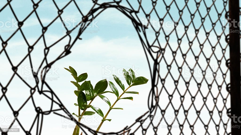 Steel wire mesh fence . Mixed media stock photo