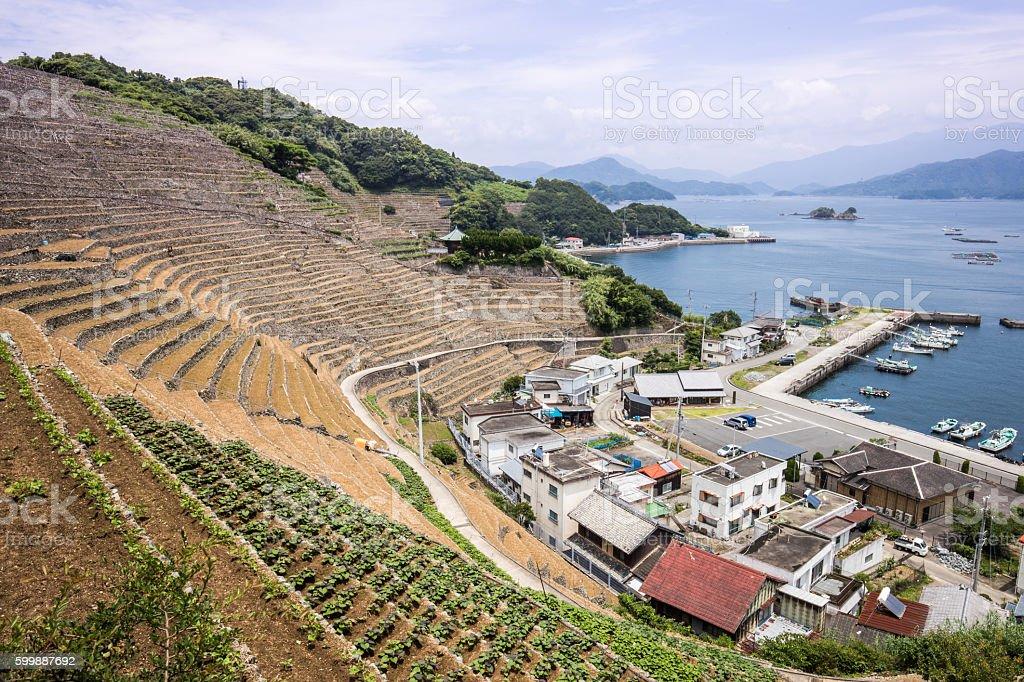 Steep terraced fields in Uwajima, Japan stock photo