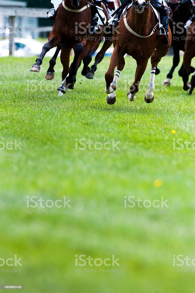 Steeplechase Horse Racing on turf rounding corner stock photo