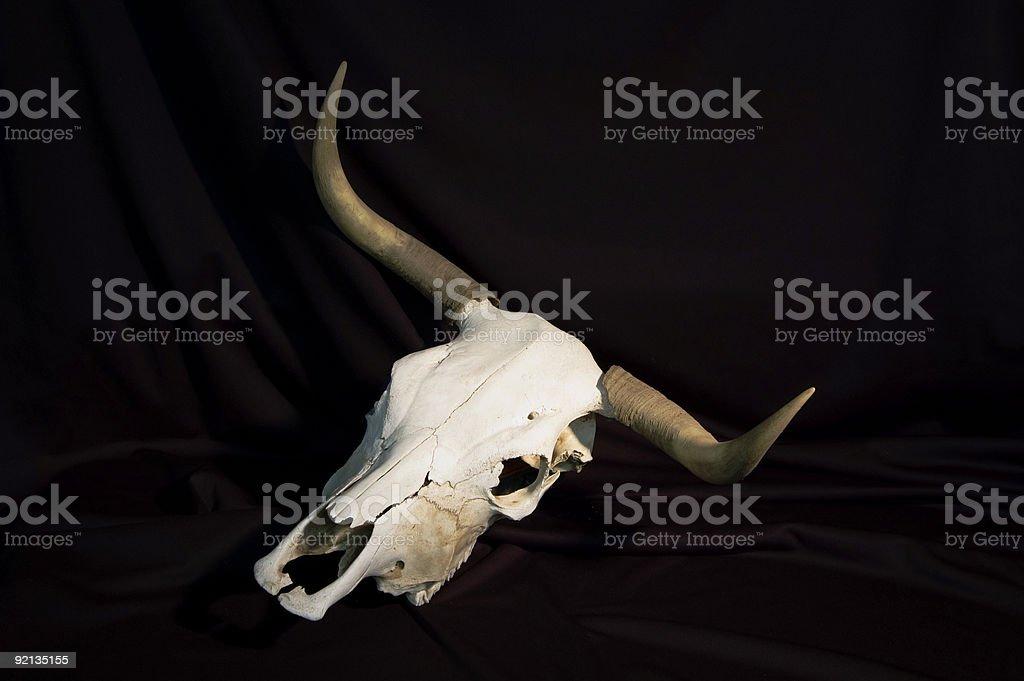 steer skull 1 stock photo