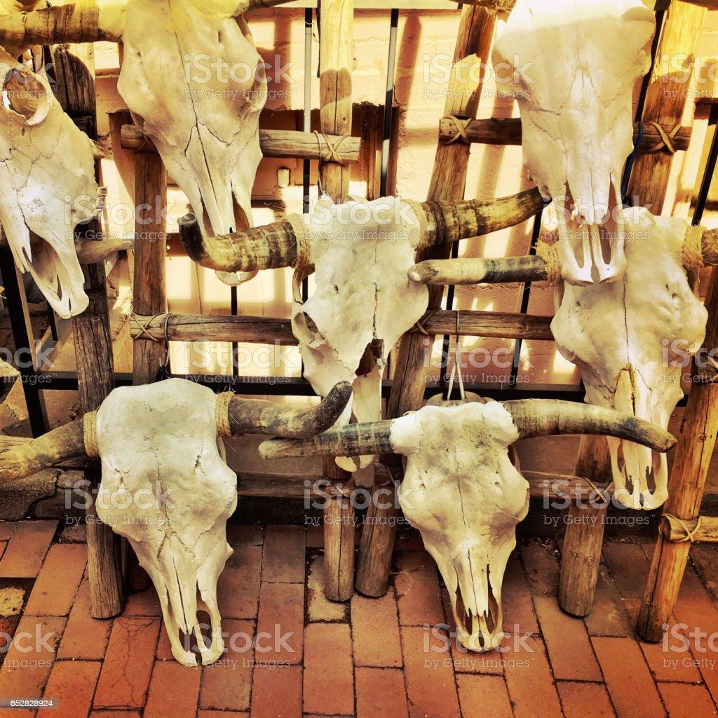 Steer skulls on sale stock photo