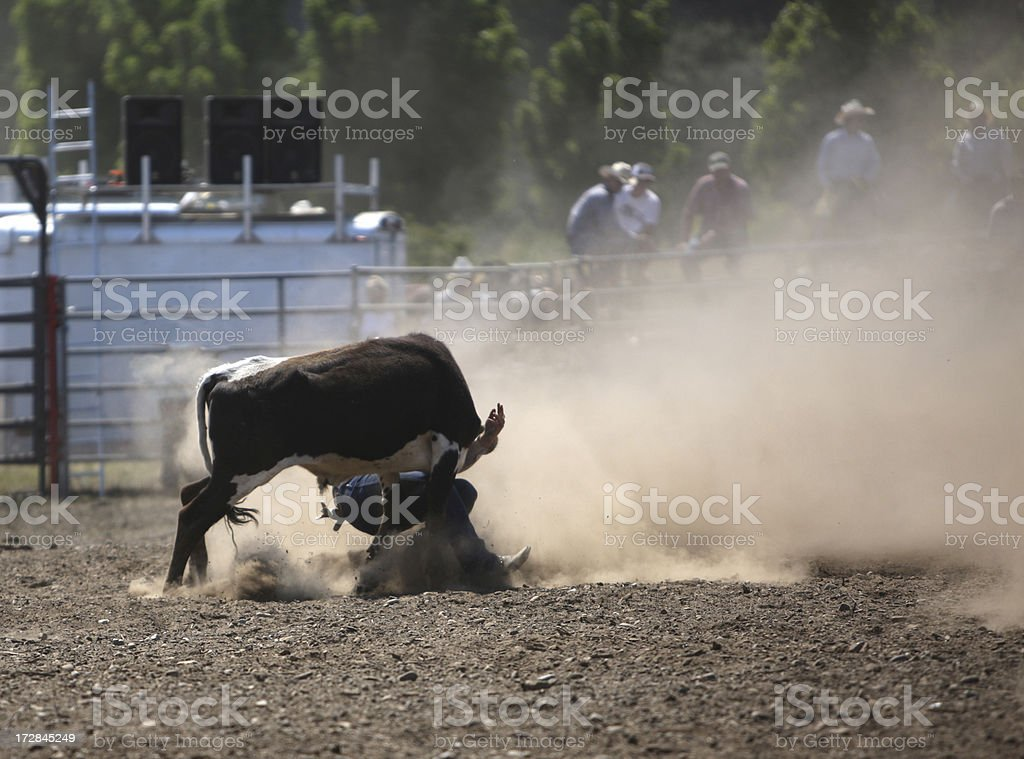 Steer Wrestling at the Rodeo royalty-free stock photo