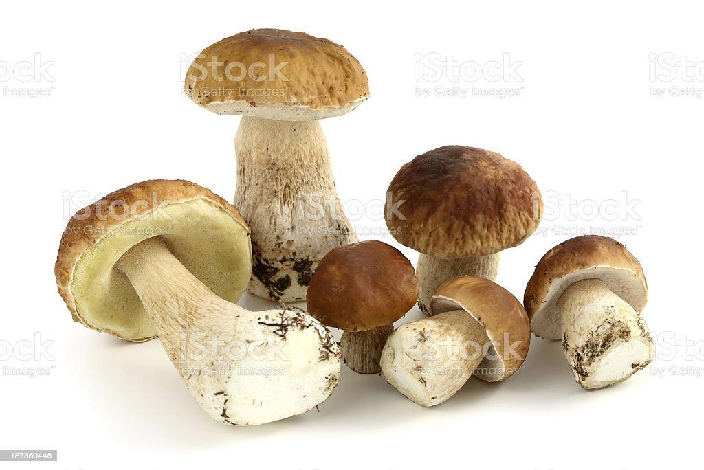 Steinpilz (boletus edulis) - porcini mushroom stock photo