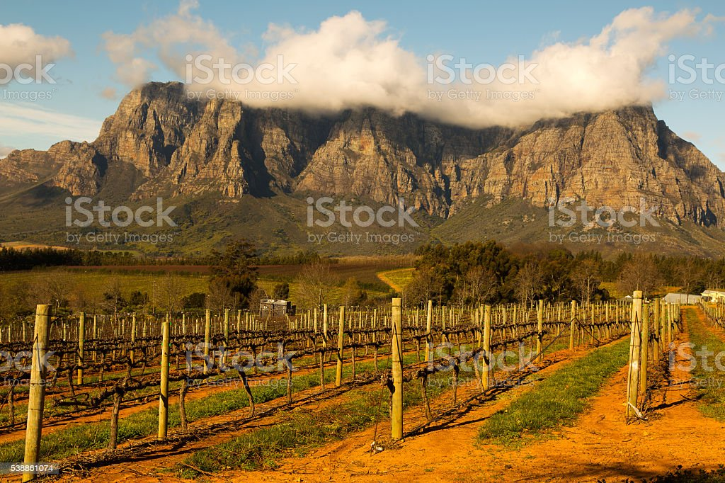 Stellenbosch is South Africa€™s wine and gourmet capital stock photo