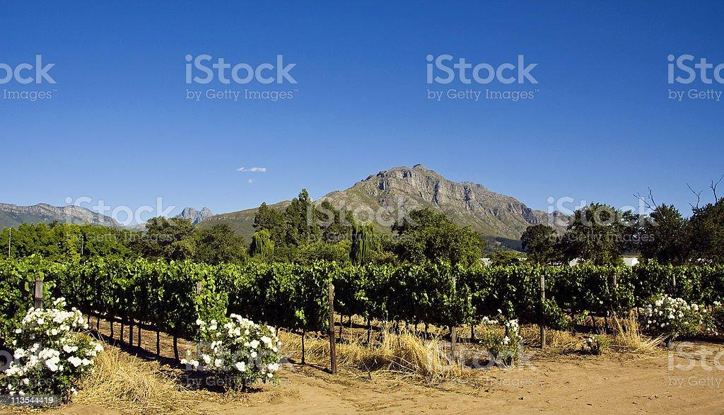 Stellenbosch scenics stock photo