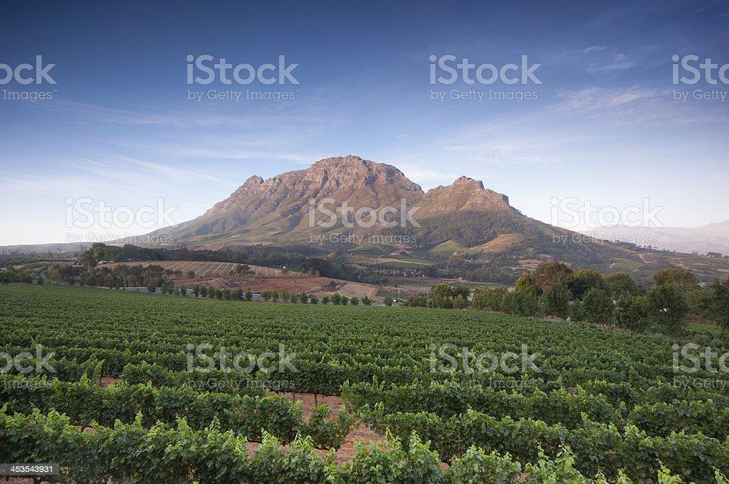 Stellenbosch, the heart of wine growing region,South Africa stock photo