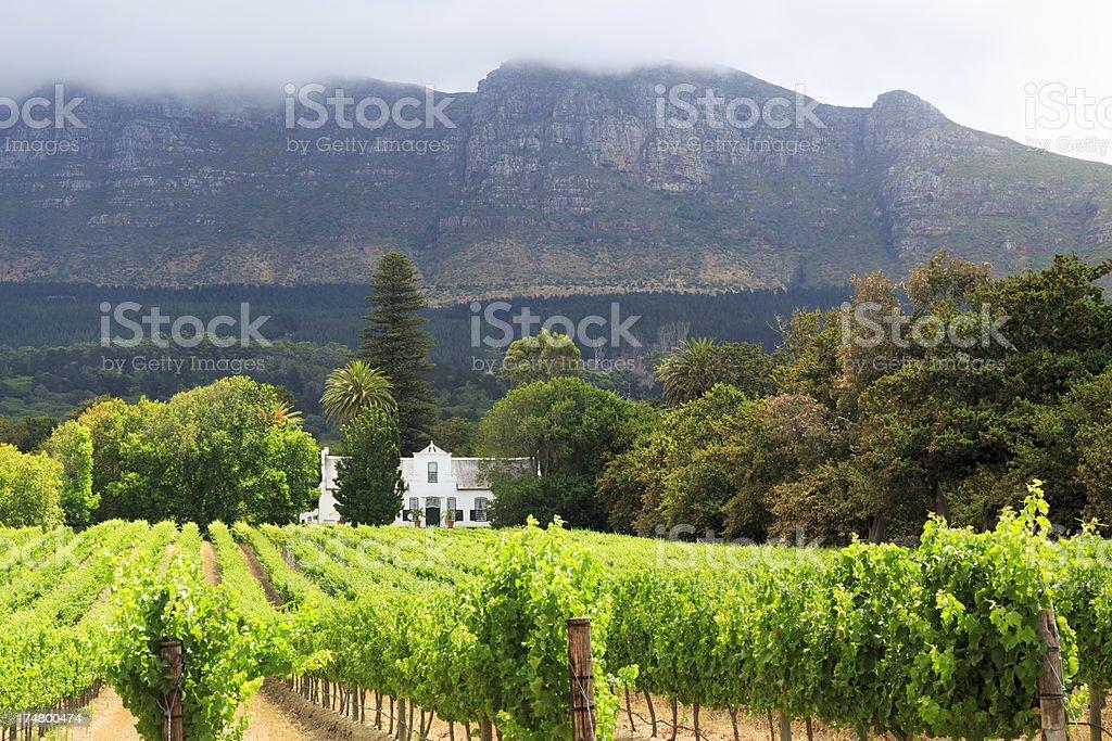 Stellenbosch Vineyard, Cape Town stock photo