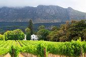 'Stellenbosch Vineyard, Cape Town'