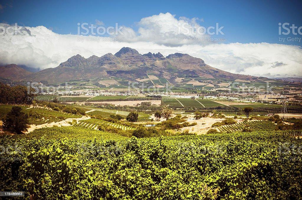 Stellenbosch vineyards stock photo